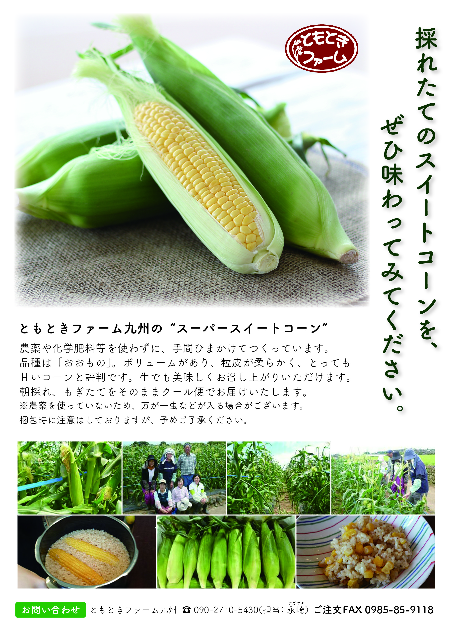 tomotoki_corn-02